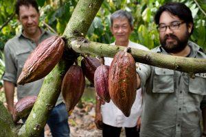 Vincent, grower, Samuel & cacao / Vincent, viljelijä, Samuel & kaakao
